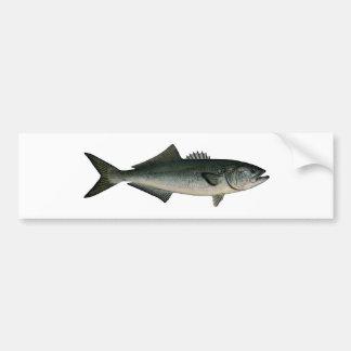 Chopper Bluefish Bumper Sticker
