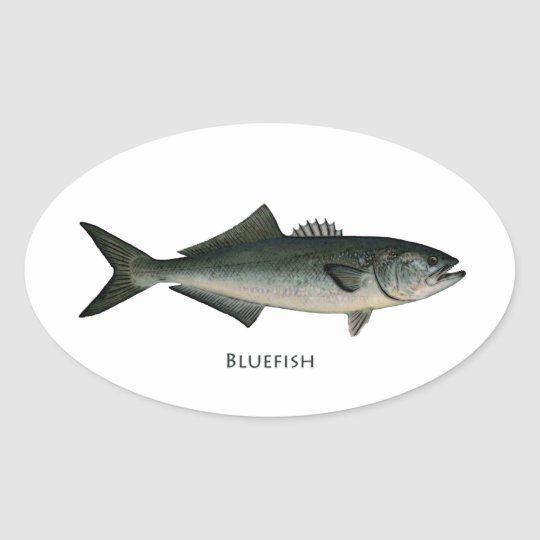 Chopper Bluefish Oval Sticker
