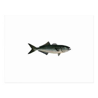 Chopper Bluefish Postcard