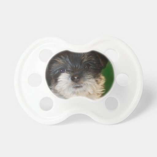 Chorkie puppy BooginHead pacifier