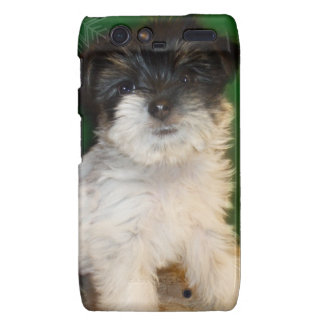 Chorkie puppy motorola droid RAZR cases