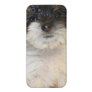 Chorkie puppy iPhone 5 covers