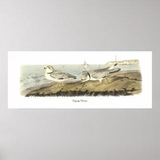 Chorlito aflautado, Juan Audubon Impresiones