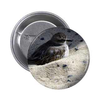 Chorlito carambolo de Nueva Zelanda Pin