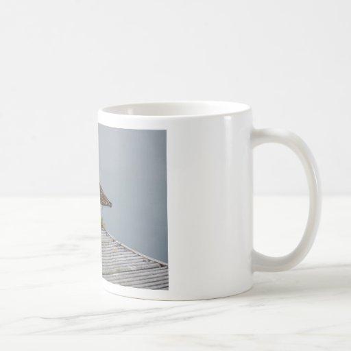 Chorlito en un puerto taza de café