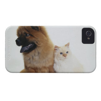 Chow Chow and a White Cat Sitting Together iPhone 4 Case