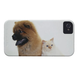 Chow Chow and a White Cat Sitting Together iPhone 4 Cover