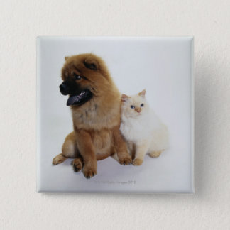 Chow Chow and a White Cat Sitting Together Pinback Button