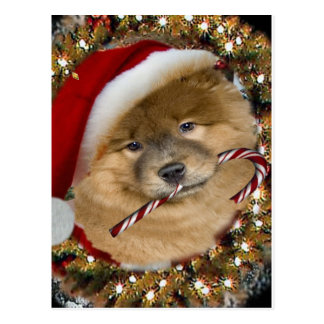 Chow Chow Christmas Candy Cane gifts Postcard