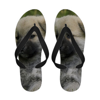 Chow Chow Dog Sandals