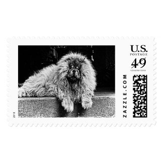 Chow Chow Dog on Porch, Black and White Postage