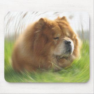 Chow-Chow, Hund, Tier, China, Natur, Animal,dog, Mouse Pad