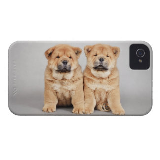 Chow chow puppies iPhone 4 cover