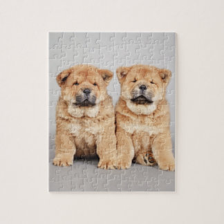 Chow chow puppies jigsaw puzzle