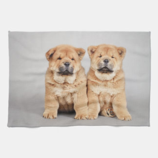 Chow chow puppies towel