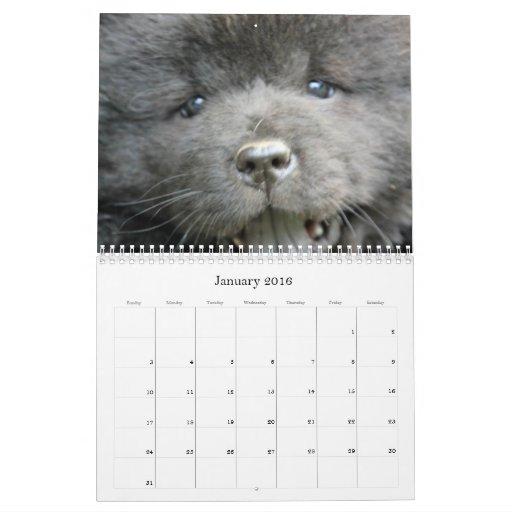 Chow Chow Rescue Calendar