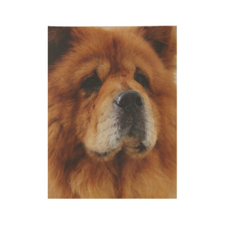 Chow Chow Wood Poster