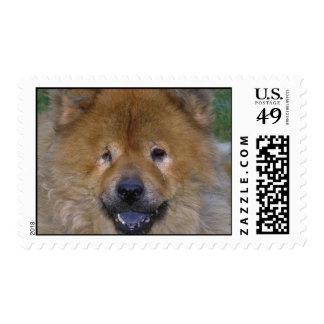 Chow Dog Postage Stamp