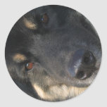 Chow Hound Stickers