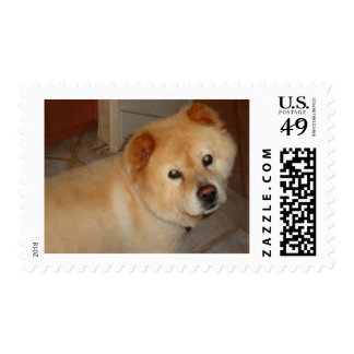 Chow Products Postage