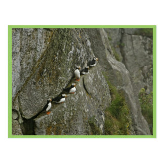 Chowiet Island Horned Puffins Post Card
