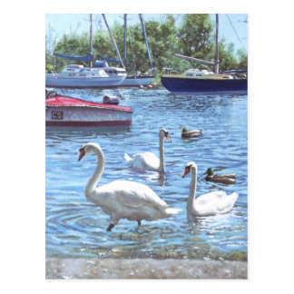 christchurch harbour swans and boats postcard