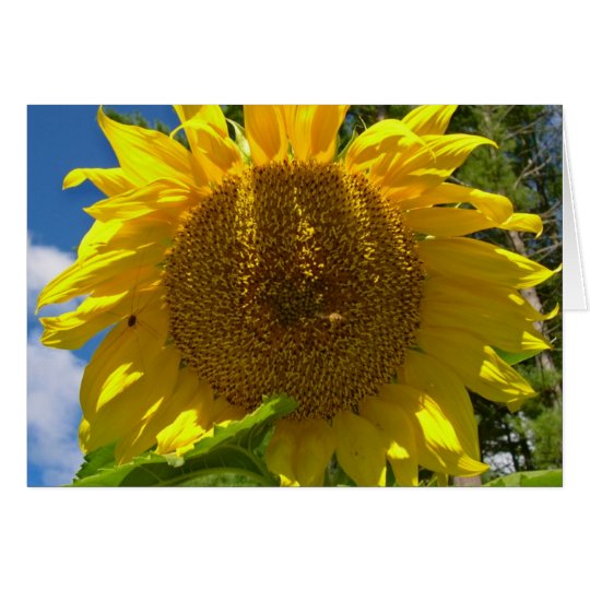 Christian Sunflower Birthday Card