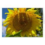 Christian Sunflower Birthday Card Cards