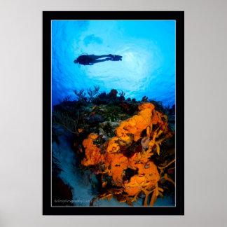 Christina diving in Cozumel Poster