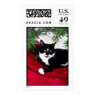 Christman Kitten Postage Stamp