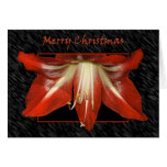 Christmas Amaryllis Card