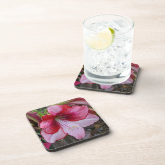 Christmas Amaryllis Red and White Holiday Floral Beverage Coaster