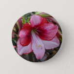 Christmas Amaryllis Red and White Holiday Floral Button