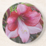 Christmas Amaryllis Red and White Holiday Floral Drink Coaster