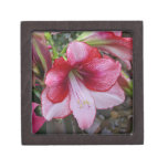 Christmas Amaryllis Red and White Holiday Floral Keepsake Box
