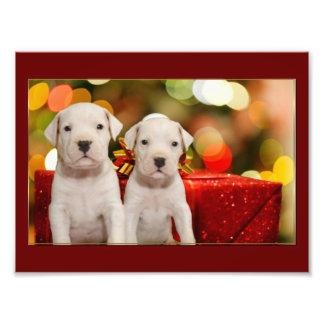 Christmas Argentine Dogo puppies Photo Print