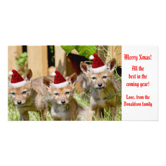 Christmas Baby Coyote Photo Card
