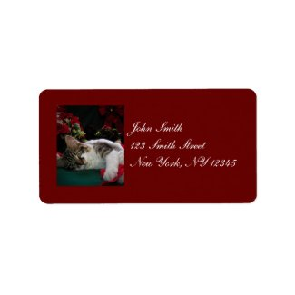 Christmas Baby Kitty Cat, Large Eyed Kitten Alone Address Label