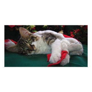 Christmas Baby Kitty Cat, Large Eyed Kitten Alone Card