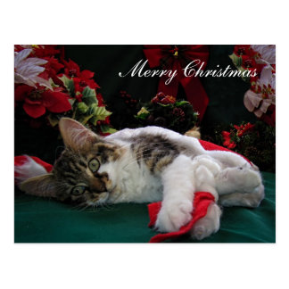 Christmas Baby Kitty Cat, Large Eyed Kitten Alone Postcard
