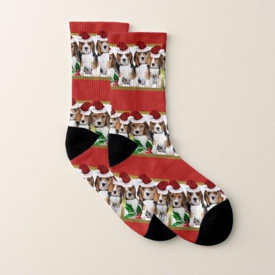Christmas Beagle puppies dog socks
