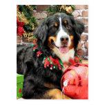 Christmas - Bernese Mountain Dog - Chloe Post Cards