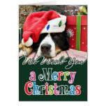 Christmas - Bernese Mountain Dog - Mya Card