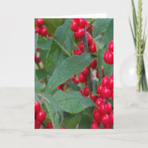 Christmas Berries Greens Holidays Red White Colors Holiday Card