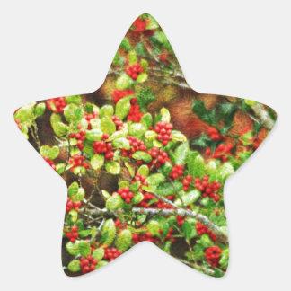 Christmas Berries Star Sticker