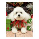 Christmas - Bichon Frise - Abby Postcard