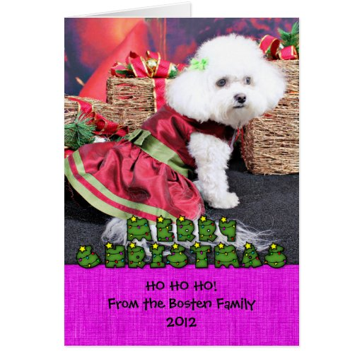 Christmas - Bichon Frise - Mia Greeting Card