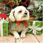 Christmas - Bichon Frise - Woody Cut Outs