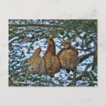 Christmas Birds Holiday Postcard