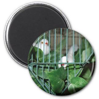 Christmas Birds Magnet